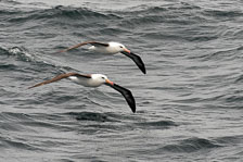 aka-Antarctic-Quest-2009-01-22__D3X7070.jpg