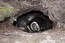 aka-Antarctic-Quest-2009-01-23__D3X7586.jpg
