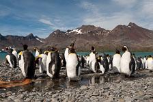 aka-Antarctic-Quest-2009-01-27__D3X10456.jpg