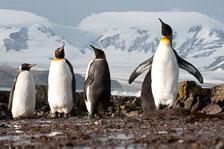 aka-Antarctic-Quest-2009-01-27__D3X9658.jpg