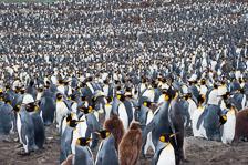 aka-Antarctic-Quest-2009-01-28__D3X10800.jpg