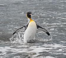 aka-Antarctic-Quest-2009-01-28__D3X11074.jpg