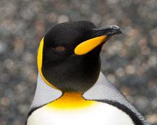 aka-Antarctic-Quest-2009-01-28__D3X11119.jpg