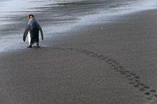 aka-Antarctic-Quest-2009-01-29__D3X11694.jpg