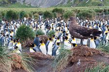 aka-Antarctic-Quest-2009-01-29__D3X11891.jpg