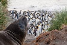 aka-Antarctic-Quest-2009-01-29__D3X11995.jpg