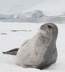 aka-Antarctic-Quest-2009-02-03__D3X16346-Edit.jpg