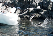 aka-Antarctic-Quest-2009-02-04__D3X17727-32.jpg