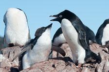 aka-Antarctic-Quest-2009-02-04__D3X17917.jpg